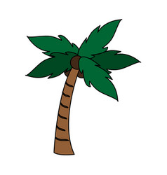 Palm tree with coconuts icon image vector