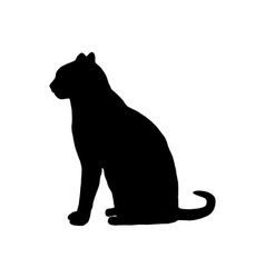 Cat on white vector image vector image