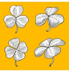 Clover leaf engraving style vector image vector image
