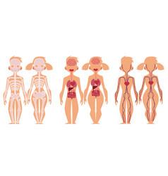human anatomy chart infographics man and woman vector image