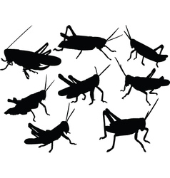 Grasshoppers vector