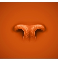 Animals nose vector image