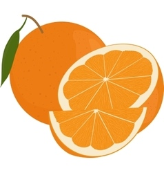 Fresh oranges fruits with green leaf whole and vector