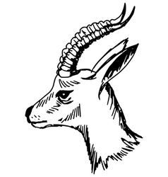 antelope vector image