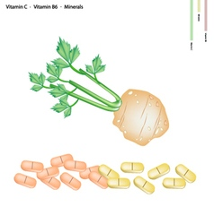 Celery root with vitamin c b6 and minerals vector