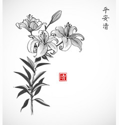 lily flowers on white background traditional vector image vector image