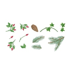 Set of christmas decoration plants vector