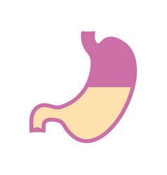 stomach icon flat design vector image vector image