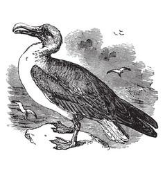 Wandering albatross vintage vector