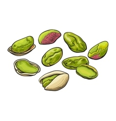 Whole and peeled pistachio nut isolated on a white vector