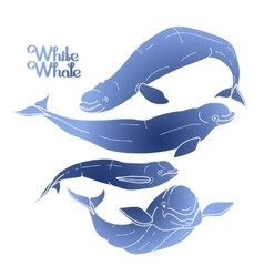 Graphic beluga whale collection vector image