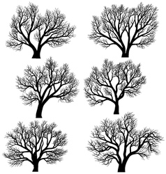 Silhouettes of trees without leaves vector
