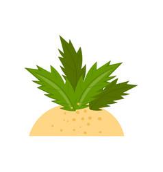 tropical plant on sand beach cartoon vector image