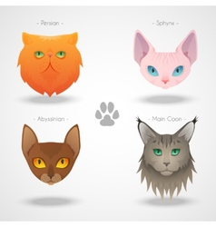 Cat Breeds icons vector image