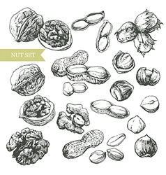 Nuts set vector