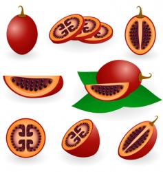 Tamarillo vector