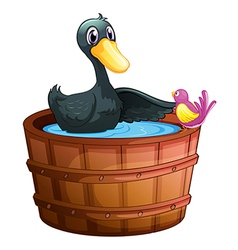 A bird watching the duck above the pail vector image vector image
