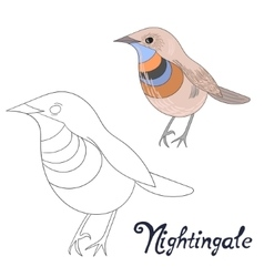 Educational game coloring book nightingale bird vector