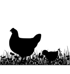 Hen an chick in the meadow vector