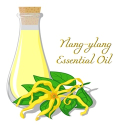 Essential oil of ylang-ylang vector