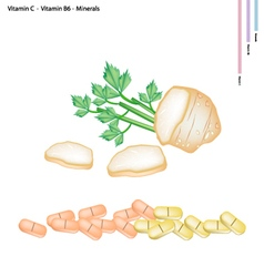 Celery roots with vitamin c b6 and minerals vector