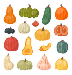 fresh pumpkin decorative seasonal ripe food vector image
