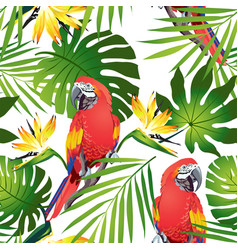tropic parrots vector image vector image