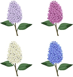 lilac set vector image vector image