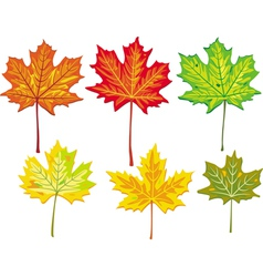 colorful maple leaves collection vector image vector image