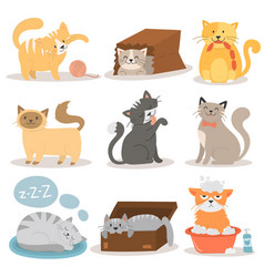 Cute cats character different pose set vector