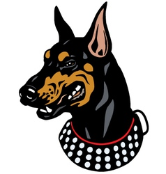 doberman head vector image