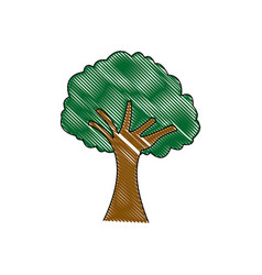 Tree natural foliage branch trunk ecology vector
