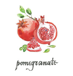 watercolor raw pomegranates vector image vector image