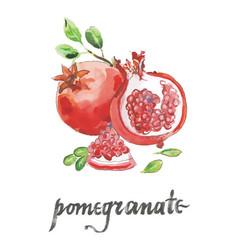 watercolor raw pomegranates vector image