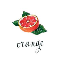 Raw red orange vector