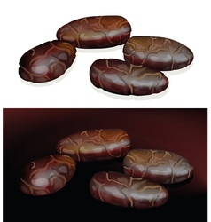 cacao beans on white and dark background vector image vector image