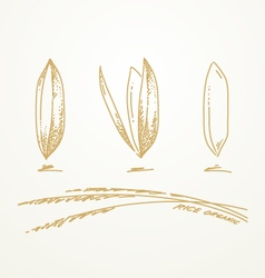 Rice grains sketch hand drawn vector