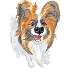 Cute smiling papillon dog vector