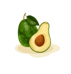 Tropical avocado fruit vector