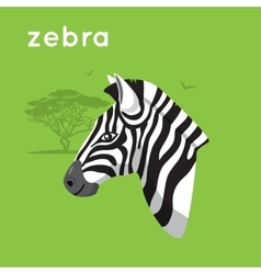 Zebra on green backdrop vector