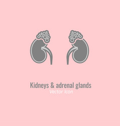 endocrine glands image vector image vector image