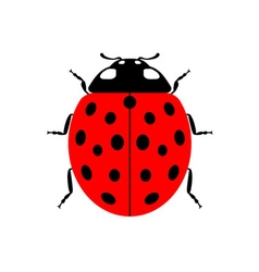 Ladybug red cartoon icon realistic vector