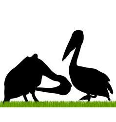 Pelican silhouette vector