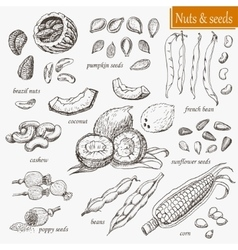 Collection of isolated nuts and seeds vector image