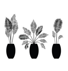 interior palm trees silhouette on the pot vector image