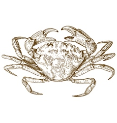 Engraving crab vector