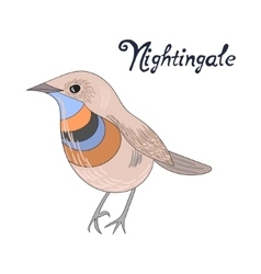 Bird nightingale vector