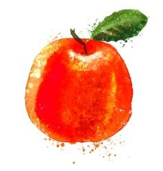 Citrus logo design template fruit or food vector