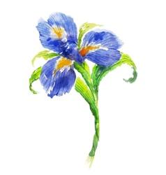 Blue watercolor iris flower vector