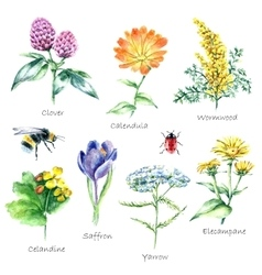 Collection of hand drawn medical herbs and plants vector image